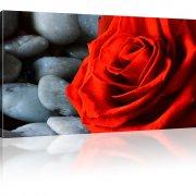 Rose Blume Bild auf Leinwand