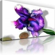 Iris Blume Bild auf Leinwand