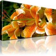Lilie Blume Bild auf Leinwand