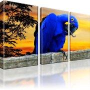 Papagei Vogel Wandbild 3-Teilig: 165x100 cm