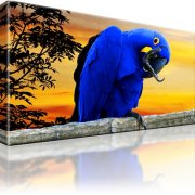 Papagei Vogel Wandbild