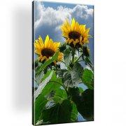 Sonnenblume Leinwandbild