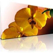 Orchidee Blume Bild auf Leinwand