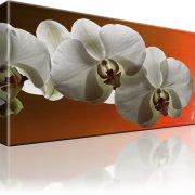 Orchidee Blume Wandbild