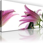 Lilie Blume Leinwandbild