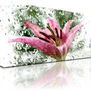 Lilie Blume Kunstdruck