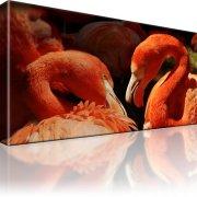 Flamingo Wandbild