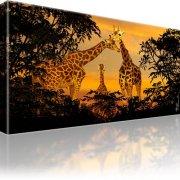 Giraffen Afrika Bild auf Leinwand