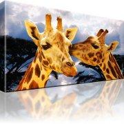 Giraffen Afrika Wandbild