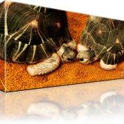 Schildkröten Wandbild