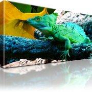 Leguan Reptilie Wandbild auf Leinwand