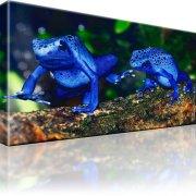 Frösche Reptilien Kunstdruck
