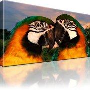 Papageien Vögel Bild auf Leinwand
