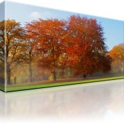 Park Wald Herbst Wandbild auf Leinwand