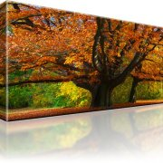 Park Wald Herbst Kunstdruck