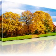 Park Wald Herbst Wandbild 1-Teilig: 100x55 cm
