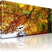 Park Wald Herbst Bild auf Leinwand
