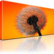 Löwenzahn Blume Kunstdruck 1-Teilig: 80x45 cm
