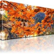 See Park Wald Herbst Wandbild
