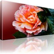 Rose Blume Leinwandbild