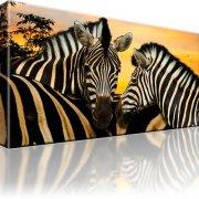 Zebra Tiere Afrika Dünen Wandbild auf Leinwand