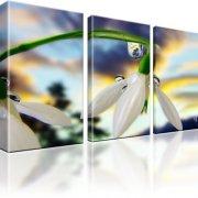 Schneeglöckchen Blume Kunstdruck 3-Teilig: 105x60 cm