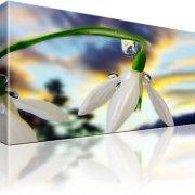 Schneeglöckchen Blume Kunstdruck