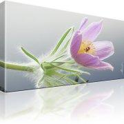 Finger Kuhschelle Blume Kunstdruck