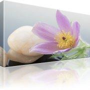 Finger Kuhschelle Blume Wandbild