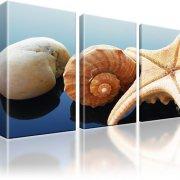 Seestern Stein Muschel Bild auf Leinwand 3-Teilig: 165x100 cm