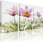 Finger Kuhschelle Blumen Leinwandbild 3-Teilig: 105x60 cm
