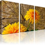Pusteblume Blume Bild auf Leinwand 3-Teilig: 105x60 cm