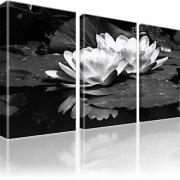 Seerose Blume Wandbild 3-Teilig: 105x60 cm | Schwarz-Weiss