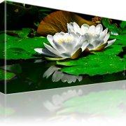 Seerose Blume Wandbild 1-Teilig: 100x55 cm | Mehrfarbig