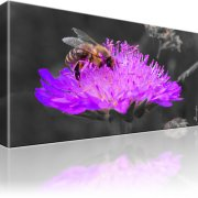 Biene Blume Kunstdruck 1-Teilig: 80x45 cm