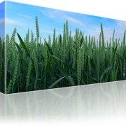 Weizen Wiese Natur Wandbild