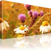 Blumen Kamille Leinwandbild 1-Teilig: 80x45 cm | Mehrfarbig