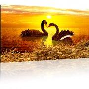 Romantische Schwäne im Sonnenuntergang Wandbild