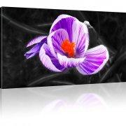 Blume Krokus Kunstdruck