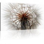 Pusteblume - Dandelion Wandbild auf Leinwand