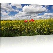 Mohnblume auf einer Wiese Wandbild