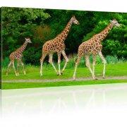 Drei Giraffen Wandbild