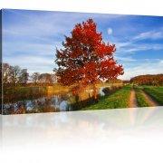 Roter Baum in der Natur Bild auf Leinwand