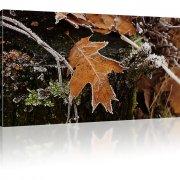 Herbstlatt am Baumstumpf als Kunstdruck