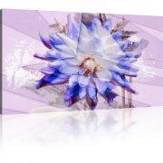 Chrysantheme Abstrakt als Kunstdruck
