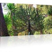 Exotischer Kaktus als Kunstdruck