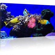 Korallenfische mit Korallen als Kunstdruck