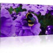 Biene auf der Blume als Kunstdruck