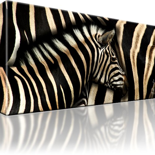 zebra tiere bild auf leinwand. Black Bedroom Furniture Sets. Home Design Ideas