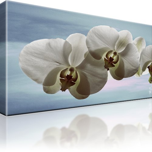 orchidee blume bild auf leinwand. Black Bedroom Furniture Sets. Home Design Ideas